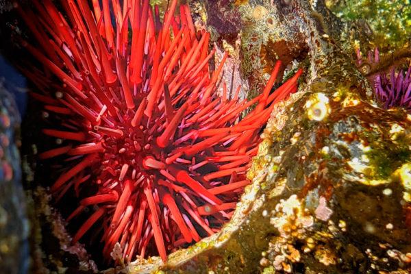 daxjustin-portfolio-landscape-sea-ucluelet-british-columbia
