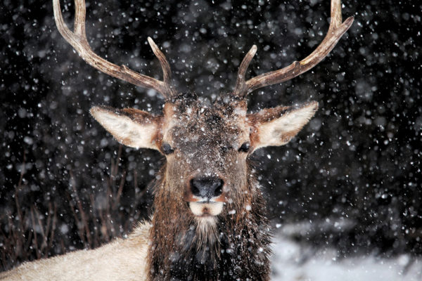 daxjustin-portfolio-wildlife-deer-1