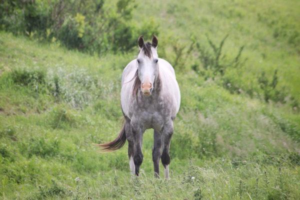 daxjustin-portfolio-wildlife-horse-alberta-1